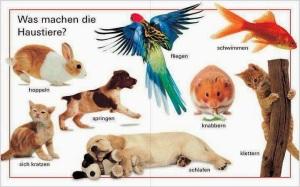 Tiere_Verben